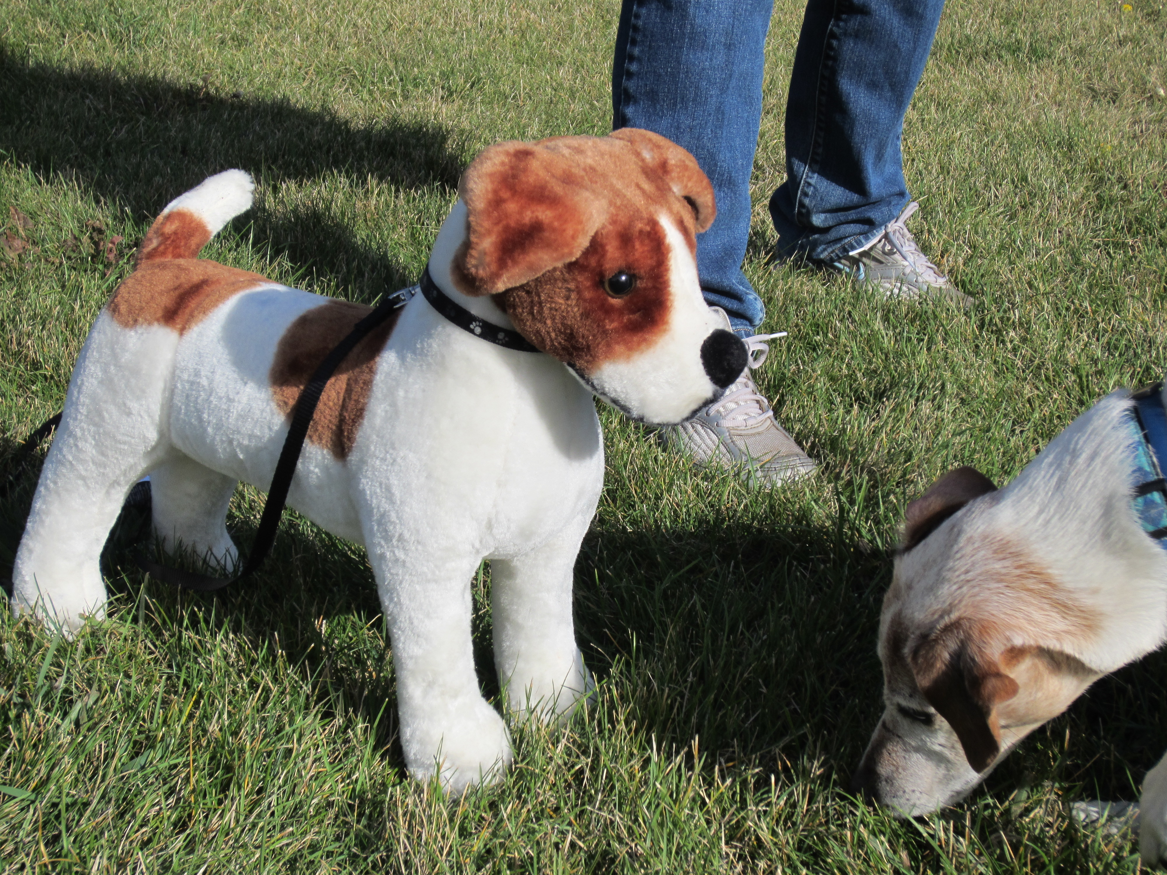 Fake Toy Dogs : Oberhund dedicated to making the world a better place